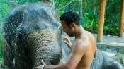 s: Elephant Bath Fun Experience: photo #3