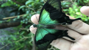 s: Butterfly Park & Insect Kingdom + Butterfly Release: photo #2