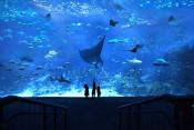 s: COMBO: Sentosa 4D AdventureLand + S.E.A. Aquarium™: photo #1